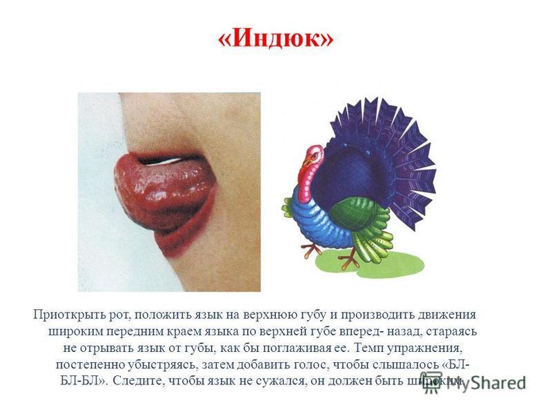 «Индюк» Приоткрыть рот, положить язык на верхнюю губу и производить движения широким передним краем языка по верхней губе вперед- назад, стараясь не отрывать язык от губы, как бы поглаживая ее. Темп упражнения, постепенно убыстряясь, затем добавить г