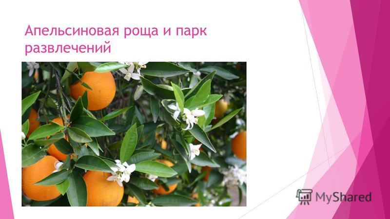Апельсиновая роща и парк развлечений