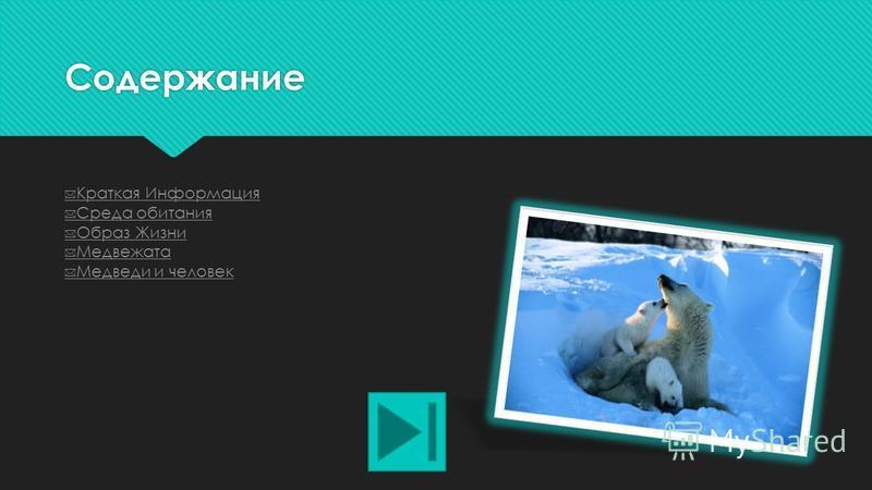 Белые Медведи Делала презентацию: Екатерина Громова