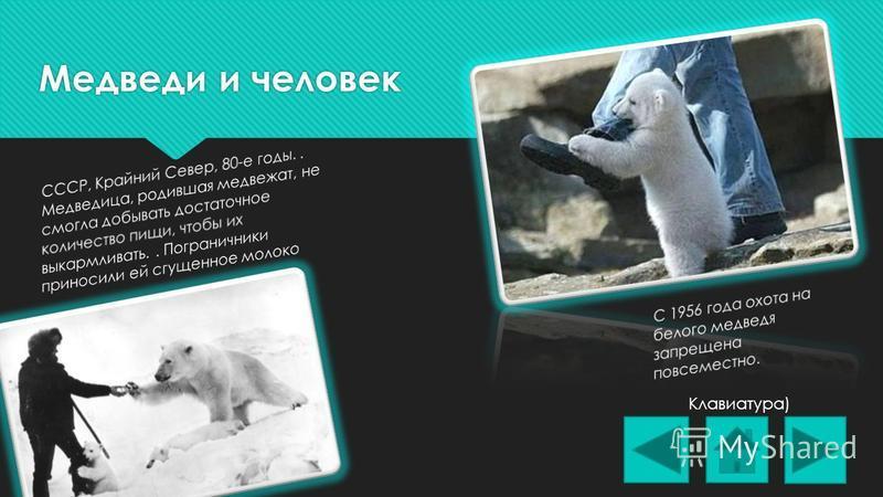 Медвежата Клавиатура)