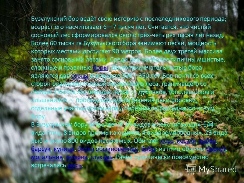 Бузулукский бор ведёт свою историю с послеледникового периода; возраст его насчитывает 67 тысяч лет. Считается, что чистый сосновый лес сформировался около трёх-четырёх тысяч лет назад. Более 60 тысяч га Бузулукского бора занимают пески, мощность кот
