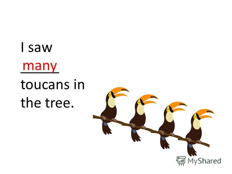 I saw _____ toucans in the tree. many