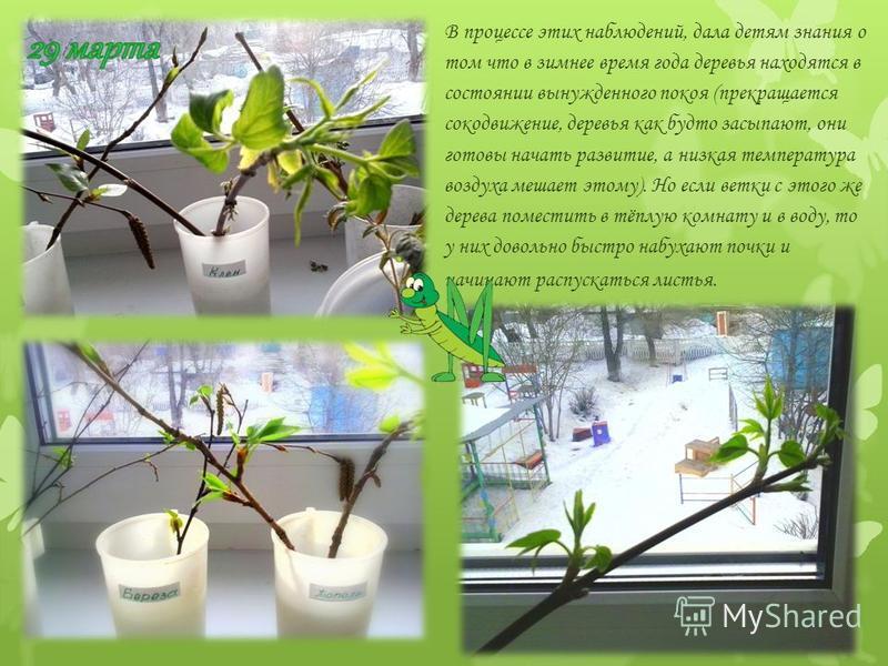 В процессе этих наблюдений, дала детям знания о том что в зимнее время года деревья находятся в состоянии вынужденного покоя (прекращается сокодвижение, деревья как будто засыпают, они готовы начать развитие, а низкая температура воздуха мешает этому