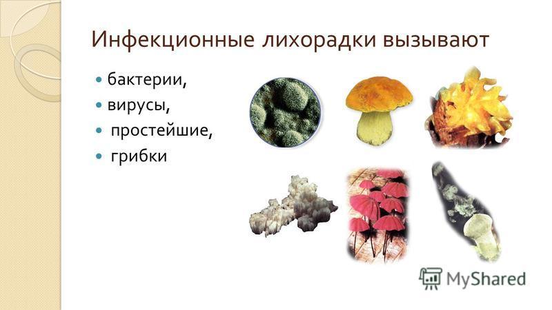 Инфекционные лихорадки вызывают бактерии, вирусы, простейшие, грибки