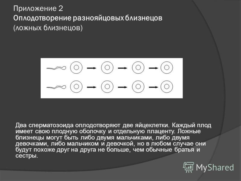 Приложение 2 Оплодотворение разнояйцовых близнецов (ложных близнецов) Два сперматозоида оплодотворяют две яйцеклетки. Каждый плод имеет свою плодную оболочку и отдельную плаценту. Ложные близнецы могут быть либо двумя мальчиками, либо двумя девочками