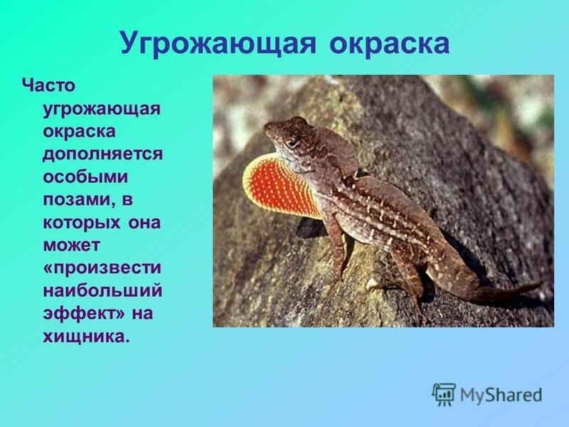 Угрожающая окраска Часто угрожающая окраска дополняется особыми позами, в которых она может «произвести наибольший эффект» на хищника.