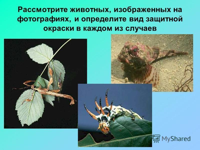 Рассмотрите животных, изображенных на фотографиях, и определите вид защитной окраски в каждом из случаев
