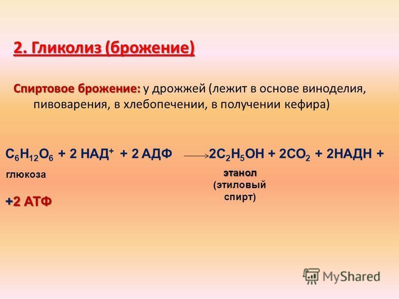 2. Гликолиз (брожение) Спиртовое брожение: Спиртовое брожение: у дрожжей (лежит в основе виноделия, пивоварения, в хлебопечении, в получении кефира) С 6 Н 12 О 6 + 2 НАД + + 2 АДФ 2С 2 Н 5 ОН + 2СО 2 + 2НАДН + +2 АТФ этанол этанол (этиловый спирт) гл