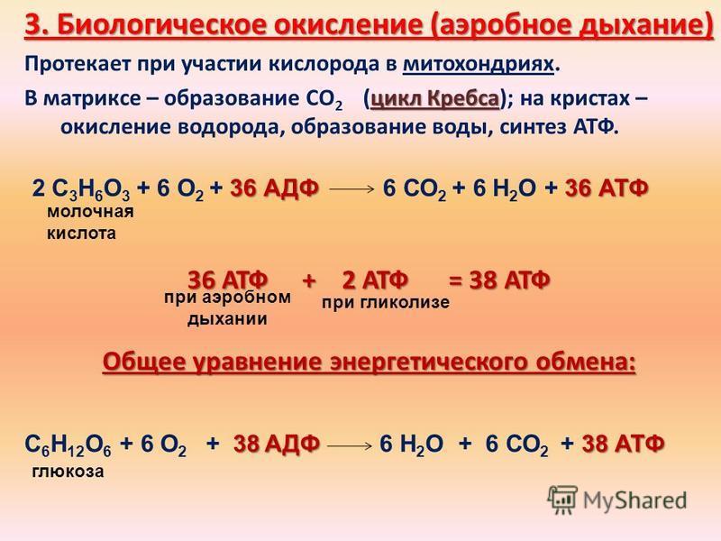 3. Биологическое окисление (аэробное дыхание) Протекает при участии кислорода в митохондриях. цикл Кребса В матриксе – образование СО 2 (цикл Кребса); на кристах – окисление водорода, образование воды, синтез АТФ. 36 АТФ + 2 АТФ = 38 АТФ Общее уравне