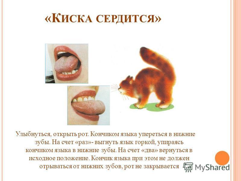 «К ИСКА СЕРДИТСЯ » Улыбнуться, открыть рот. Кончиком языка упереться в нижние зубы. На счет «раз»- выгнуть язык горкой, упираясь кончиком языка в нижние зубы. На счет «два» вернуться в исходное положение. Кончик языка при этом не должен отрываться от