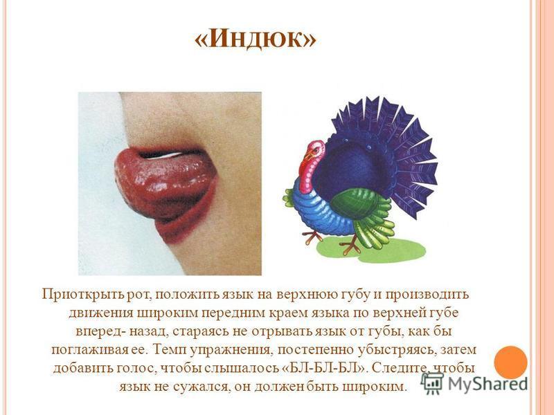 «И НДЮК » Приоткрыть рот, положить язык на верхнюю губу и производить движения широким передним краем языка по верхней губе вперед- назад, стараясь не отрывать язык от губы, как бы поглаживая ее. Темп упражнения, постепенно убыстряясь, затем добавить