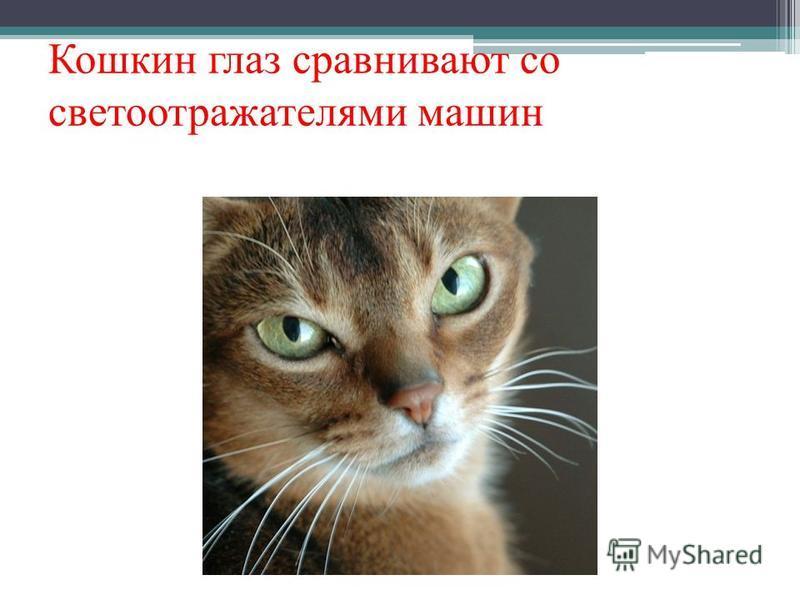 Кошкин глаз сравнивают со светоотражателями машин