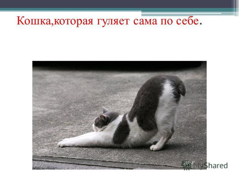 Кошка,которая гуляет сама по себе.