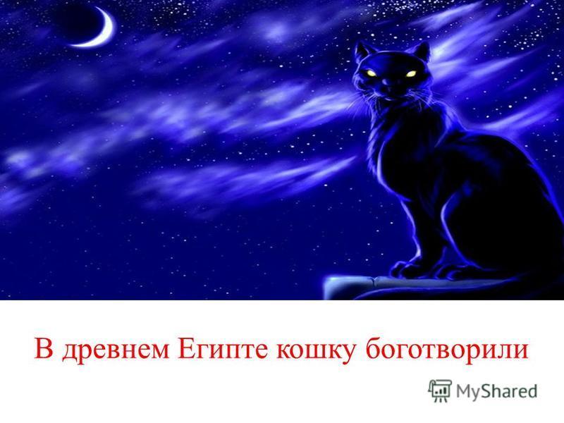 В древнем Египте кошку боготворили