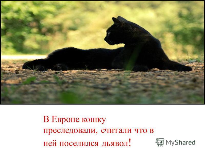 В Европе кошку преследовали, считали что в ней поселился дьявол !