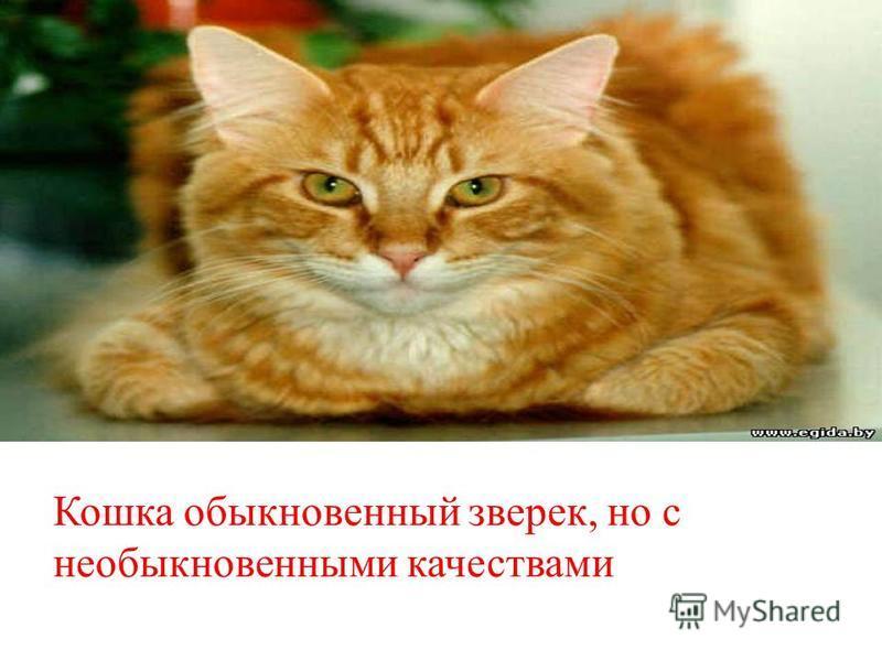 Кошка обыкновенный зверек, но с необыкновенными качествами