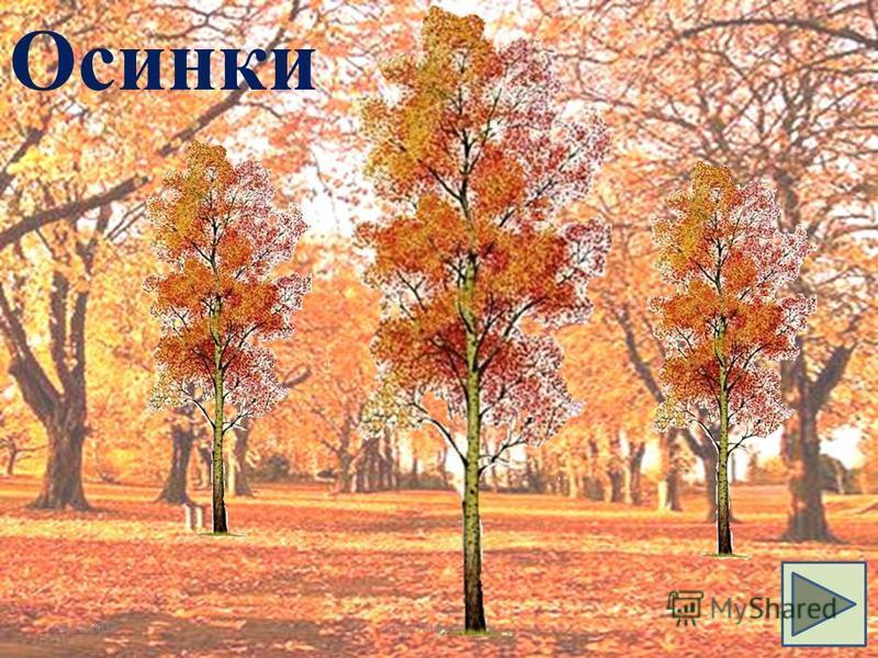 04.12.2015http://aida.ucoz.ru22 Осинки