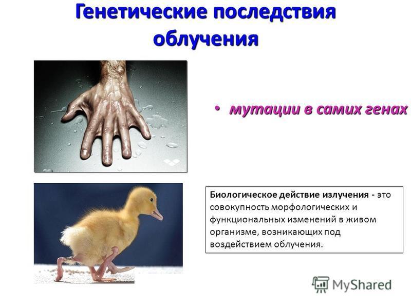 Генетические последствия облучения мутации в самих генах мутации в самих генах Биологическое действие излучения - это совокупность морфологических и функциональных изменений в живом организме, возникающих под воздействием облучения.