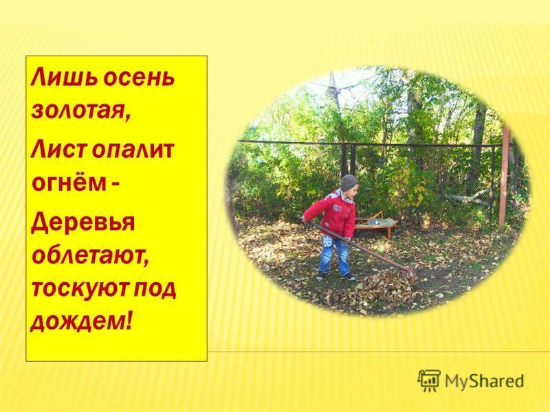 Лишь осень золотая, Лист опалит огнём - Деревья облетают, тоскуют под дождем!