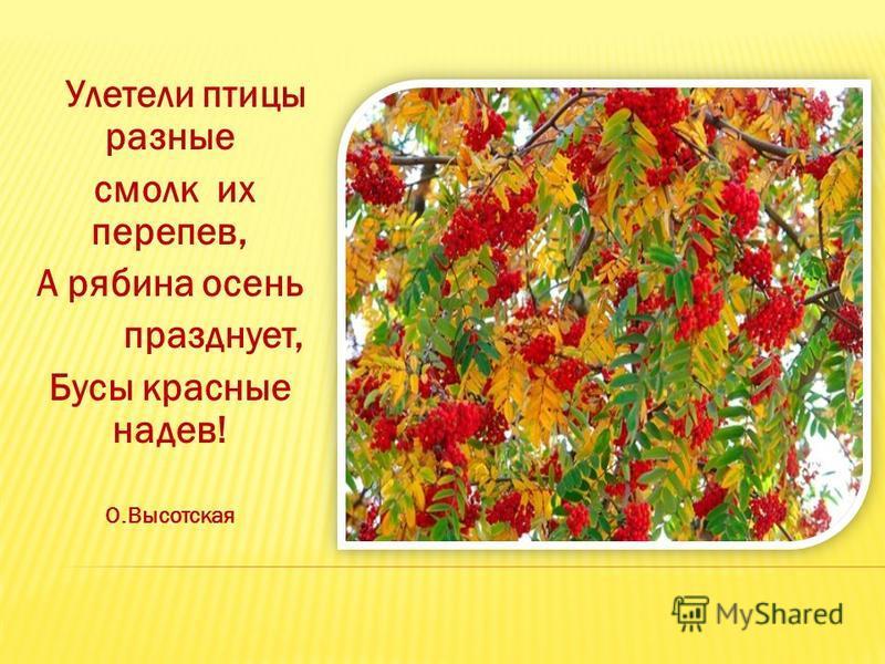 Улетели птицы разные смолк их перепев, А рябина осень празднует, Бусы красные надев! О.Высотская