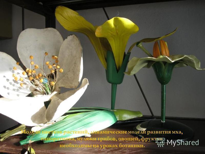 Модели цветков растений, динамические модели развития мха, папоротника, муляжи грибов, овощей, фруктов необходимы на уроках ботаники.