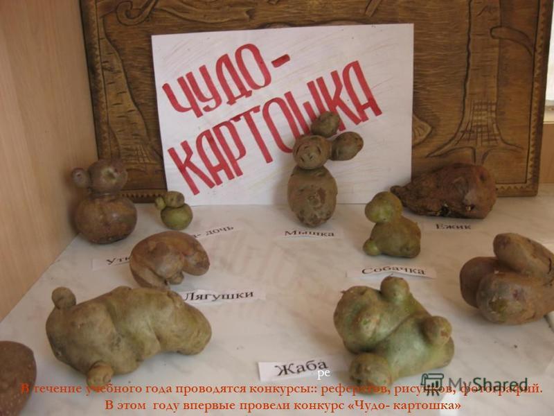 В ре В течение учебного года проводятся конкурсы:: рефератов, рисунков, фотографий. В этом году впервые провели конкурс «Чудо- картошка»