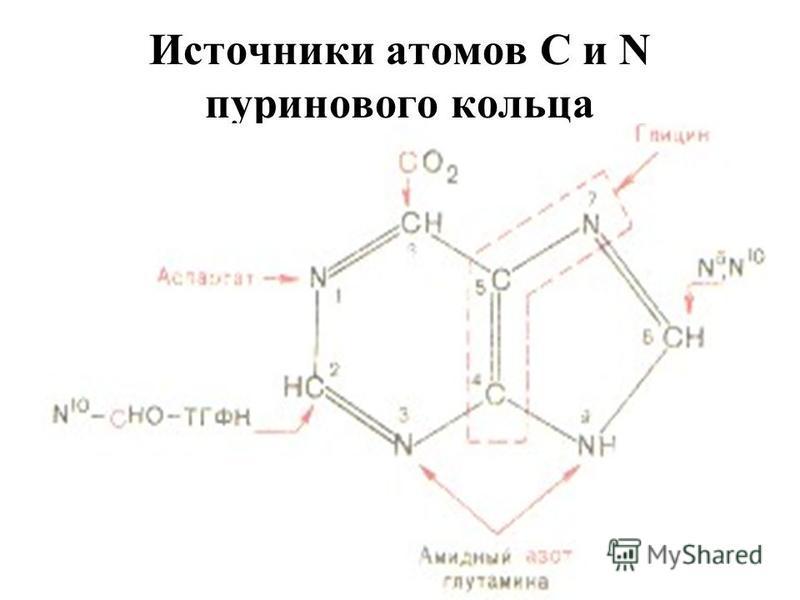 Источники атомов С и N пуринового кольца