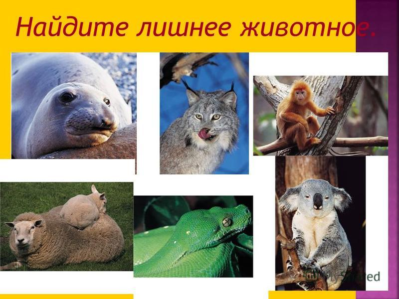 Найдите лишнее животное.