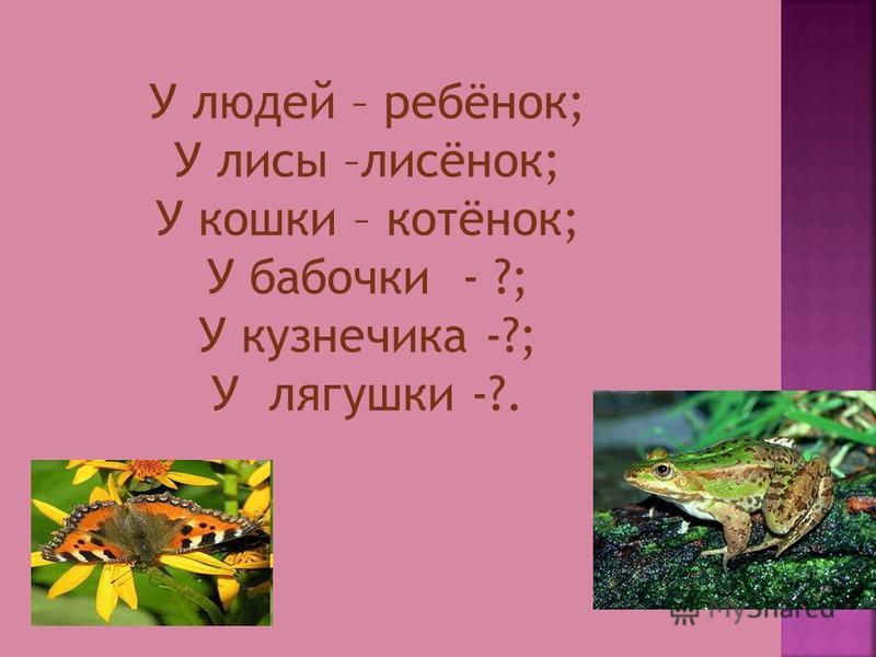 У людей – ребёнок; У лисы –лисёнок; У кошки – котёнок; У бабочки - ?; У кузнечика -?; У лягушки -?.