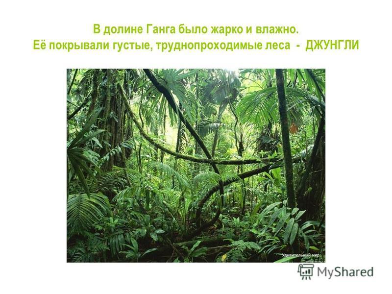 В долине Ганга было жарко и влажно. Её покрывали густые, труднопроходимые леса - ДЖУНГЛИ