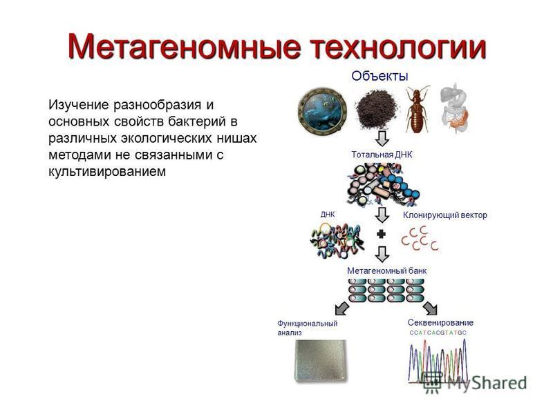 Метагеномные технологии Изучение разнообразия и основных свойств бактерий в различных экологических нишах методами не связанными с культивированием Объекты Тотальная ДНК Клонирующий вектор Секвенирование Функциональный анализ ДНК Метагеномный банк