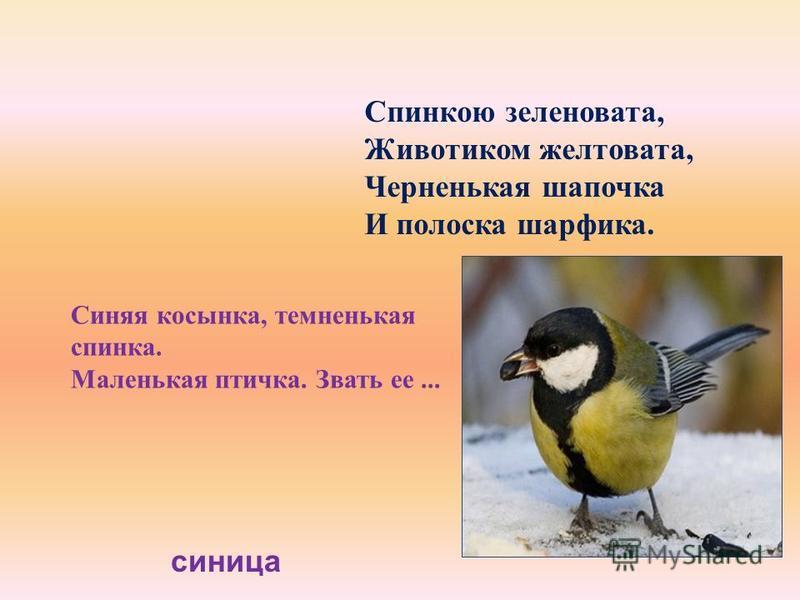 Синяя косынка, темненькая спинка. Маленькая птичка. Звать ее... Спинкою зеленовата, Животиком желтовата, Черненькая шапочка И полоска шарфика. синица