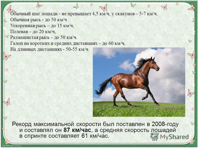 Рекорд максимальной скорости был поставлен в 2008-году и составлял он 87 км/час, а средняя скорость лошадей в спринте составляет 61 км/час. Обычный шаг лошади - не превышает 4,5 км/ч, у скакунов – 5-7 км/ч. Обычная рысь - до 50 км/ч Ускоренная рысь –
