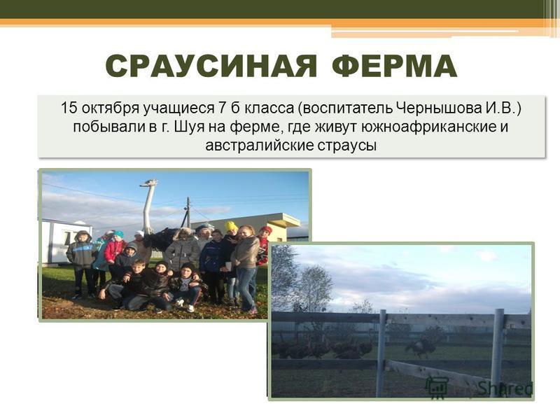 15 октября учащиеся 7 б класса (воспитатель Чернышова И.В.) побывали в г. Шуя на ферме, где живут южноафриканские и австралийские страусы СРАУСИНАЯ ФЕРМА