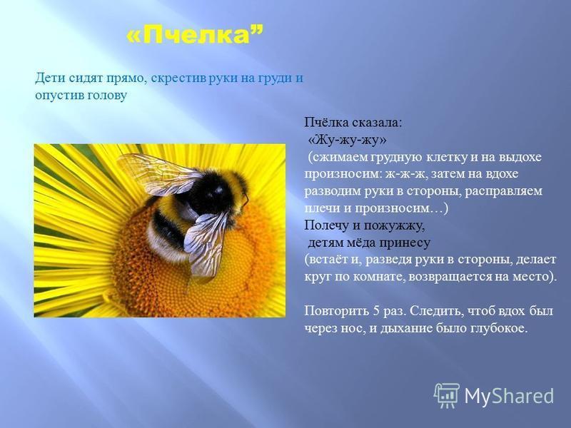 Пчёлка сказала : « Жу - жу - жу » ( сжимаем грудную клетку и на выдохе произносим : ж - ж - ж, затем на вдохе разводим руки в стороны, расправляем плечи и произносим …) Полечу и пожужжу, детям мёда принесу ( встаёт и, разведя руки в стороны, делает к