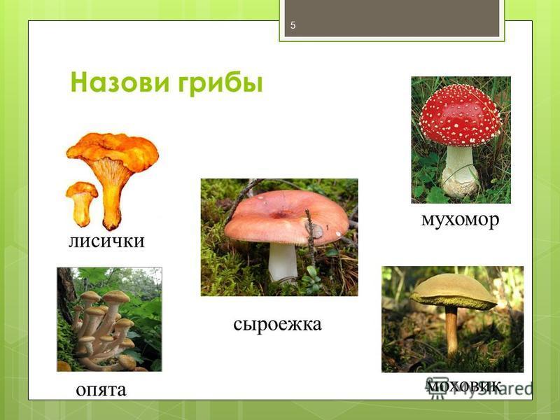 Назови грибы 5 лисички мухомор опята моховик сыроежка