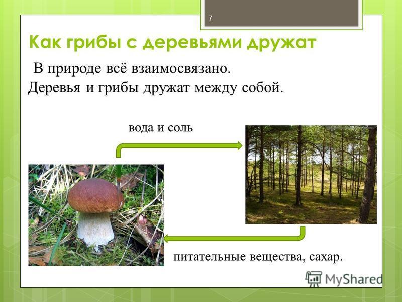 В природе всё взаимосвязано. Деревья и грибы дружат между собой. питательные вещества, сахар. вода и соль Как грибы с деревьями дружат 7