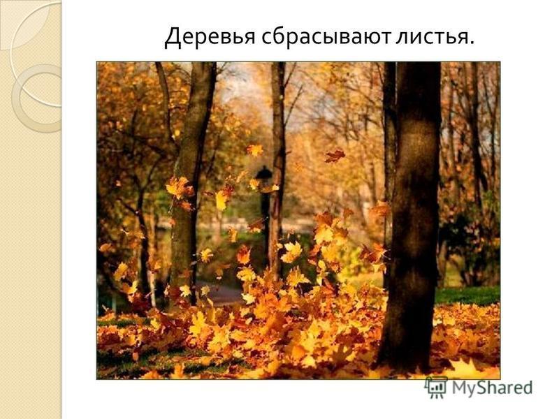 Деревья сбрасывают листья.