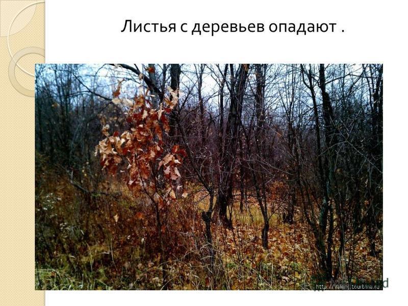 Листья с деревьев опадают.