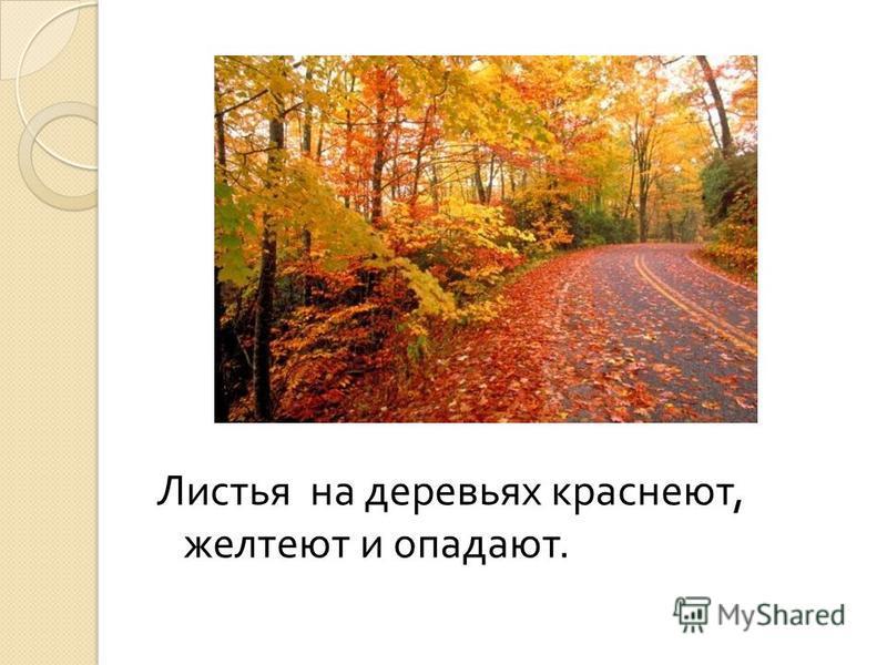 Листья на деревьях краснеют, желтеют и опадают.