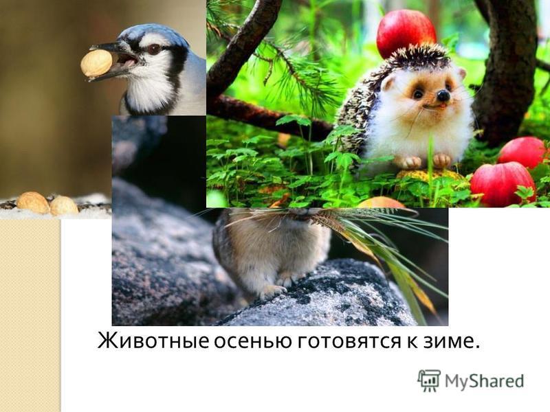 Животные осенью готовятся к зиме.