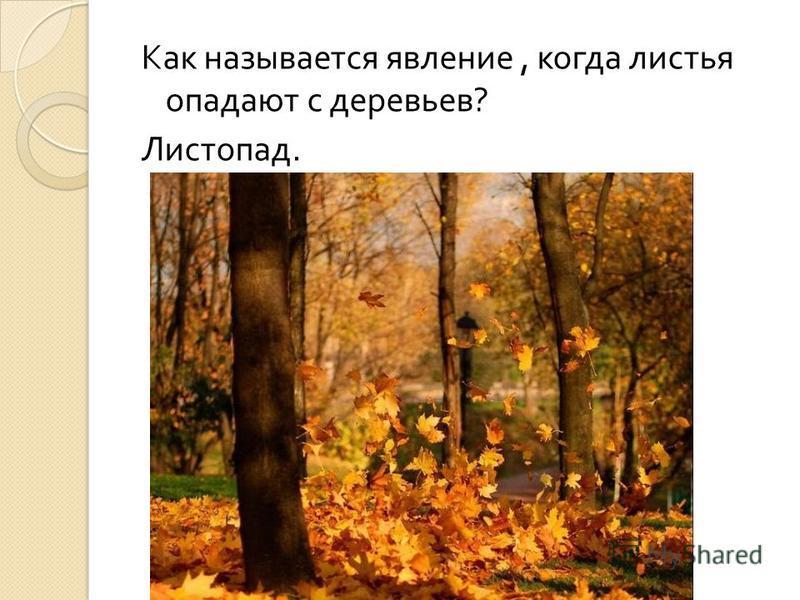 Как называется явление, когда листья опадают с деревьев ? Листопад.