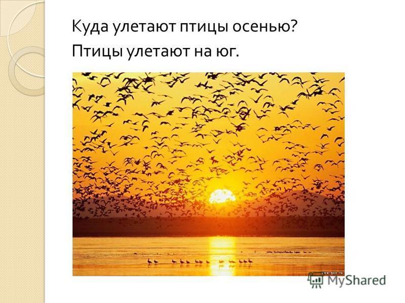 Куда улетают птицы осенью ? Птицы улетают на юг.