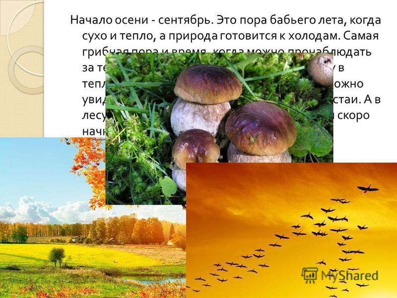 Начало осени - сентябрь. Это пора бабьего лета, когда сухо и тепло, а природа готовится к холодам. Самая грибная пора и время, когда можно пронаблюдать за тем, как первые птицы готовятся к полету в теплые края. Если посмотреть на небо, то можно увиде