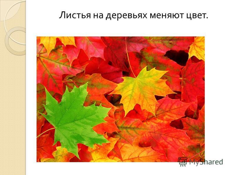 Листья на деревьях меняют цвет.