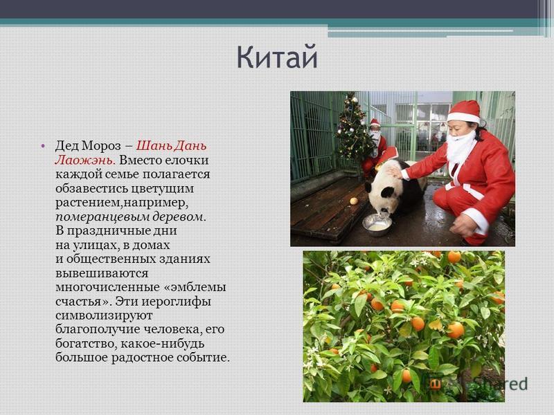Китай Дед Мороз – Шань Дань Лаожэнь. Вместо елочки каждой семье полагается обзавестись цветущим растением,например, померанцевым деревом. В праздничные дни на улицах, в домах и общественных зданиях вывешиваются многочисленные «эмблемы счастья». Эти и