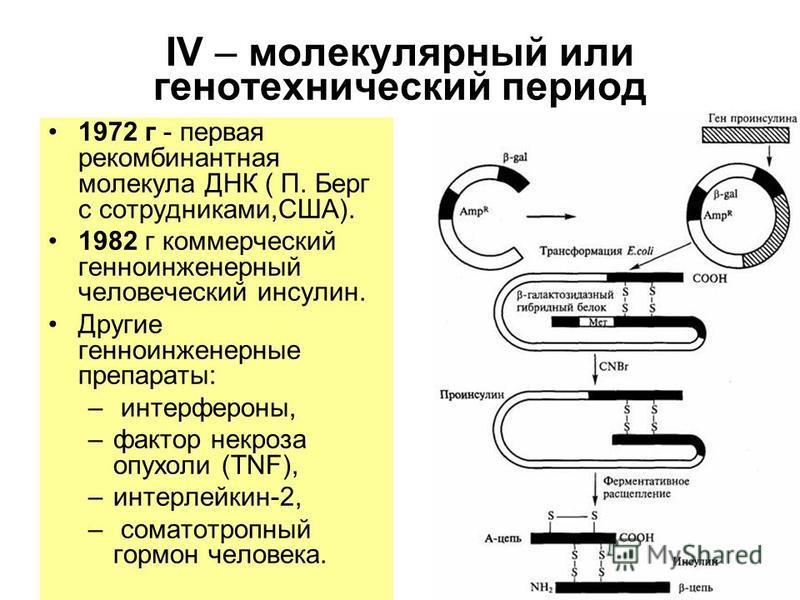 IV – молекулярный или геотехнический период 1972 г - первая рекомбинантная молекула ДНК ( П. Берг с сотрудниками,США). 1982 г коммерческий генно-инженерный человеческий инсулин. Другие генно-инженерные препараты: – интерфероны, –фактор некроза опухол