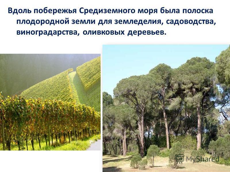 Вдоль побережья Средиземного моря была полоска плодородной земли для земледелия, садоводства, виноградарства, оливковых деревьев.