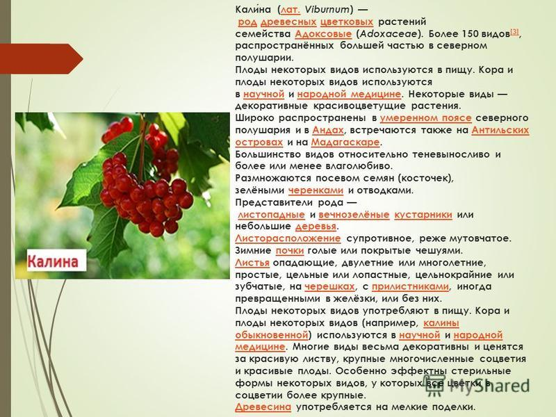 Калина (лат. Viburnum ) род древесных цветковых растений семейства Адоксовые ( Adoxaceae ). Более 150 видов [3], распространённых большей частью в северном полушарии. Плоды некоторых видов используются в пищу. Кора и плоды некоторых видов используютс