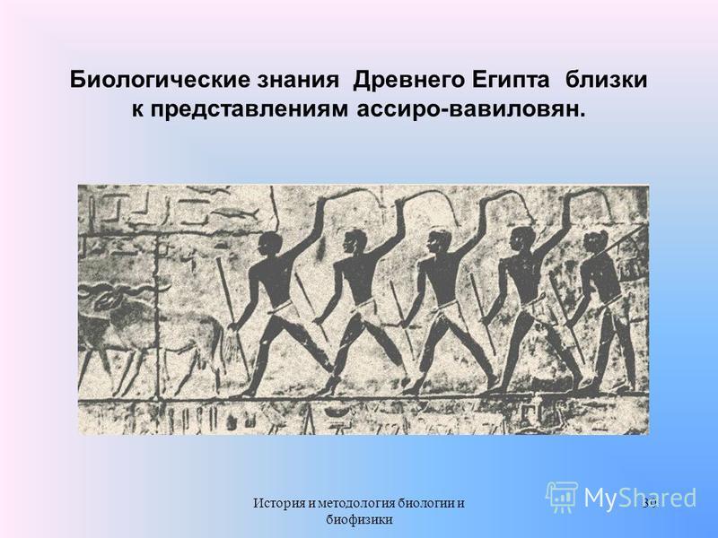 Биологические знания Древнего Египта близки к представлениям ассиро-вавилонян. 30История и методология биологии и биофизики